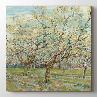 The white orchard görseli.