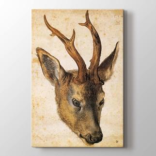 Deer görseli.