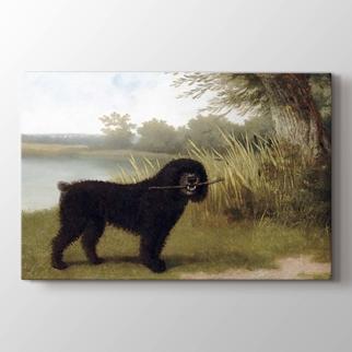 A Black Dog With a Stick By a Lake görseli.