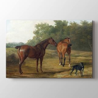 Köpek ve Atlar görseli.