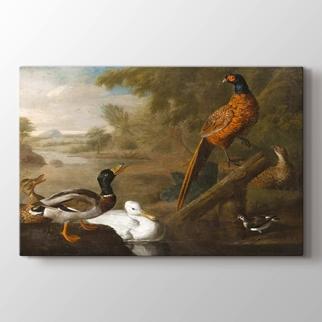 Ördekler Sülünler ve Peyzaj  görseli.