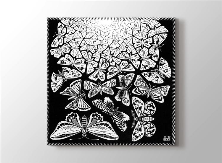 Butterfly Tessellation