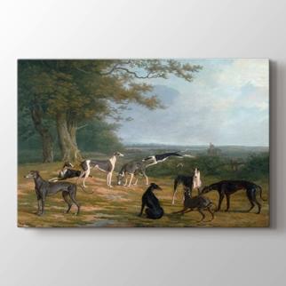 Nine Greyhounds in a  görseli.