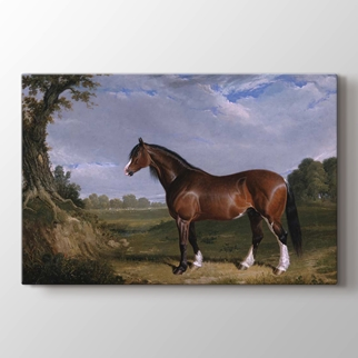 A Clydesdale Stallion görseli.
