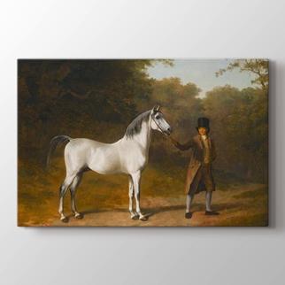 The Wellesley Arabian görseli.