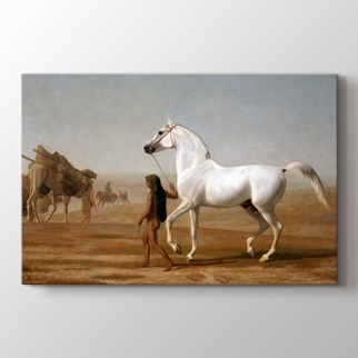 Grey Arabian Led Through The Desert görseli.