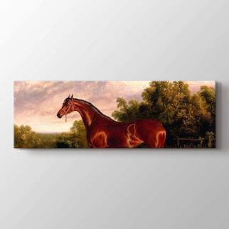 Horse görseli.