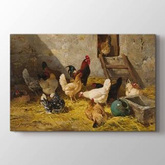 Kümeste Tavuklar görseli.