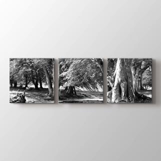 Orman Manzarası  görseli.