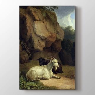 İki Keçi görseli.