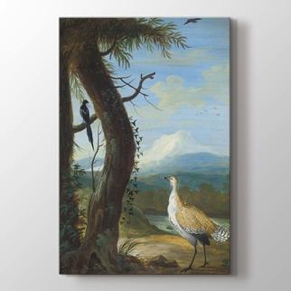 Egzotik Kuşlar görseli.